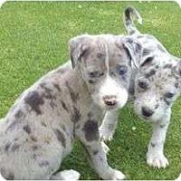 Adopt A Pet :: Barrett - Bakersfield, CA