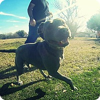Adopt A Pet :: Zander - Houston, TX