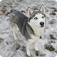 Adopt A Pet :: Athena - Geneseo, IL