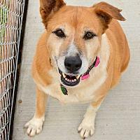 Adopt A Pet :: Gracie - Acton, CA