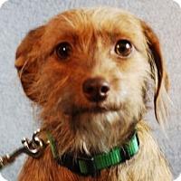 Adopt A Pet :: Izzy - Minneapolis, MN