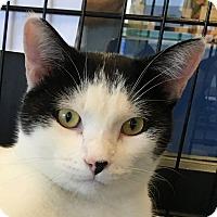 Adopt A Pet :: Frisk - Winchester, CA