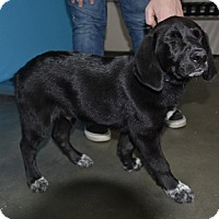 Adopt A Pet :: Charles - Meridian, ID