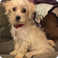 Adopt A Pet :: Jon - Los Angeles, CA
