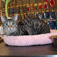 Adopt A Pet :: Chardonnay - Alpharetta, GA