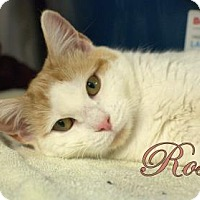 Adopt A Pet :: Rose - Middleburg, FL