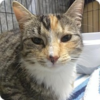 Adopt A Pet :: Cheeta - Palo Cedro, CA