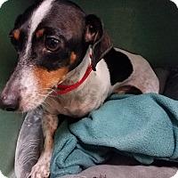 Adopt A Pet :: DEWIE - Lubbock, TX