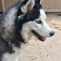 Adopt A Pet :: Sage - Memphis, TN
