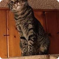 Adopt A Pet :: Sadie - Sedalia, MO