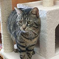 Adopt A Pet :: Bernie - Columbus, OH