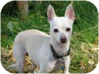 Chihuahua Mix Dog for adoption in Salt Lake City, Utah - Jimmy