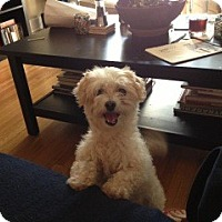Adopt A Pet :: Peanut Butter - North Hollywood, CA