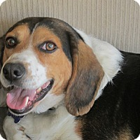 Adopt A Pet :: Luke - Franklin, VA