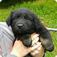 Adopt A Pet :: Claus*ADOPTION PENDING* - Mill Creek, WA