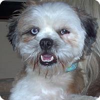 Adopt A Pet :: Rudy 2016 (m/c) - Chesterfield, MI