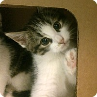 Adopt A Pet :: Vinny - East Brunswick, NJ