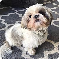 Adopt A Pet :: KORY - Los Angeles, CA