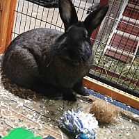 Adopt A Pet :: Clack - Princeton, MN