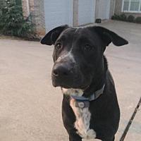 Adopt A Pet :: Logan - Georgia - Fulton, MO