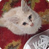 Adopt A Pet :: Papaya - Garner, NC