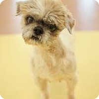 Adopt A Pet :: Julia - Columbia, SC