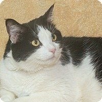 Adopt A Pet :: Ariel - Elmwood Park, NJ