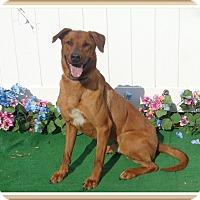 Adopt A Pet :: OZOE - Marietta, GA