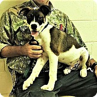 Adopt A Pet :: Brownie - Hagerstown, MD