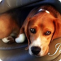 Adopt A Pet :: Joey - Orlando, FL