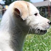 Adopt A Pet :: Narnia - Foster, RI