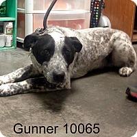Adopt A Pet :: Gunner - Greencastle, NC