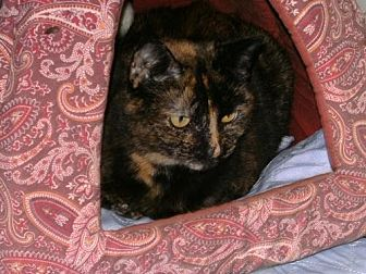 Domestic Shorthair Cat for adoption in Sparta, Wisconsin - Momma Cat
