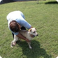 Blue Heeler/Pointer Mix Dog for adoption in San Antonio, Texas - Red