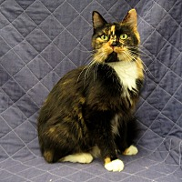 Adopt A Pet :: Melody - Redwood Falls, MN
