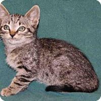 Adopt A Pet :: *ROCKY - Hanford, CA