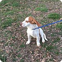 Adopt A Pet :: Eleven - Shelter Island, NY