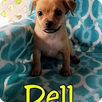 Adopt A Pet :: Dell - Hamilton, ON