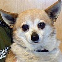 Adopt A Pet :: Ethel - Wildomar, CA