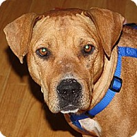 Adopt A Pet :: Addie - Marion, AR