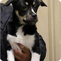 Adopt A Pet :: Tip - Alliance, NE