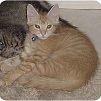Adopt A Pet :: Brady - Franklin, NC