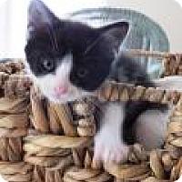 Adopt A Pet :: Georgia - Reston, VA