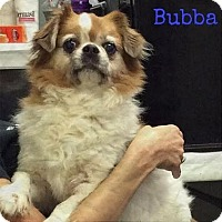 Adopt A Pet :: Bubba - Huntley, IL