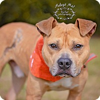 Adopt A Pet :: Amos - Fort Valley, GA