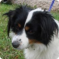 Adopt A Pet :: Carson - Erwin, TN