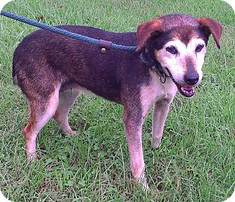 Terrier (Unknown Type, Medium)/Australian Cattle Dog Mix Dog for adoption in Metamora, Indiana - Fern
