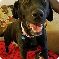 Adopt A Pet :: Portia - Ogden, UT