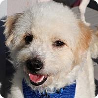 Adopt A Pet :: Harry Potter - La Costa, CA