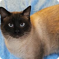 Adopt A Pet :: Simon - Greensboro, NC